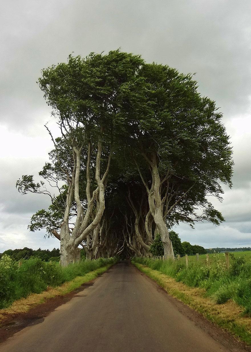 the-dark-hedges-tree-tunnel-12