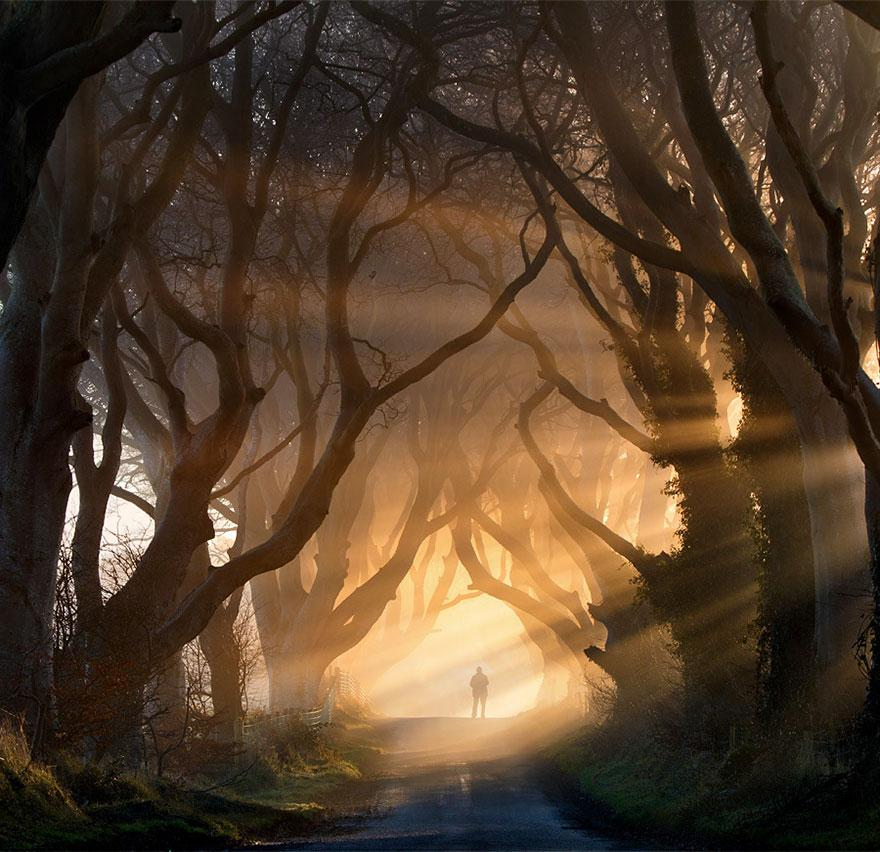 the-dark-hedges-tree-tunnel-2