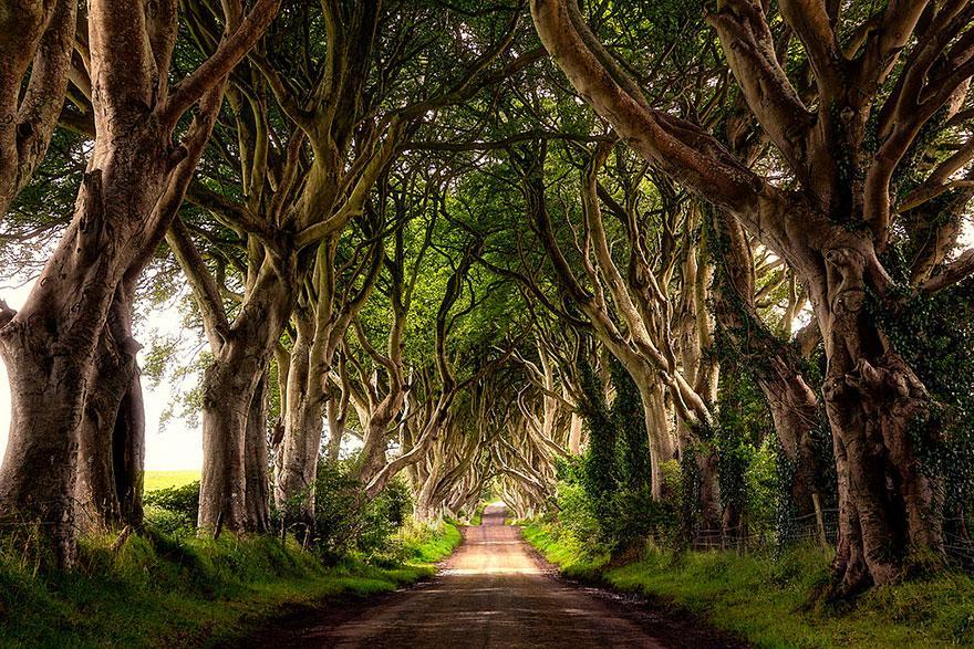 the-dark-hedges-tree-tunnel-5