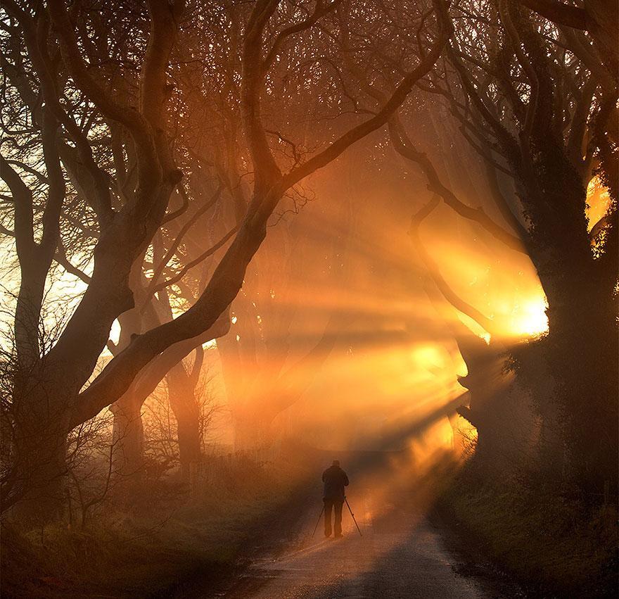 the-dark-hedges-tree-tunnel-7