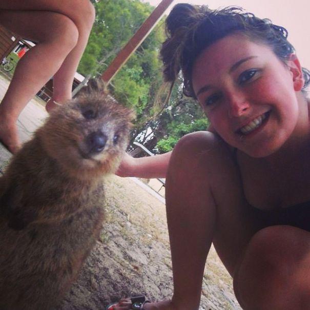Quokka-Selfie (10)