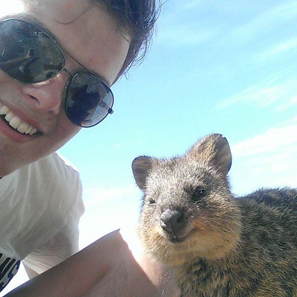 Quokka-Selfie (11)