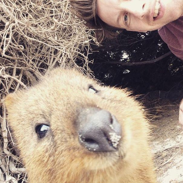 Quokka-Selfie (14)