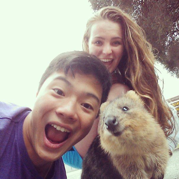 Quokka-Selfie (22)