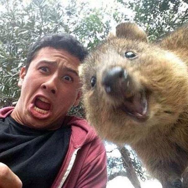 Quokka-Selfie (23)