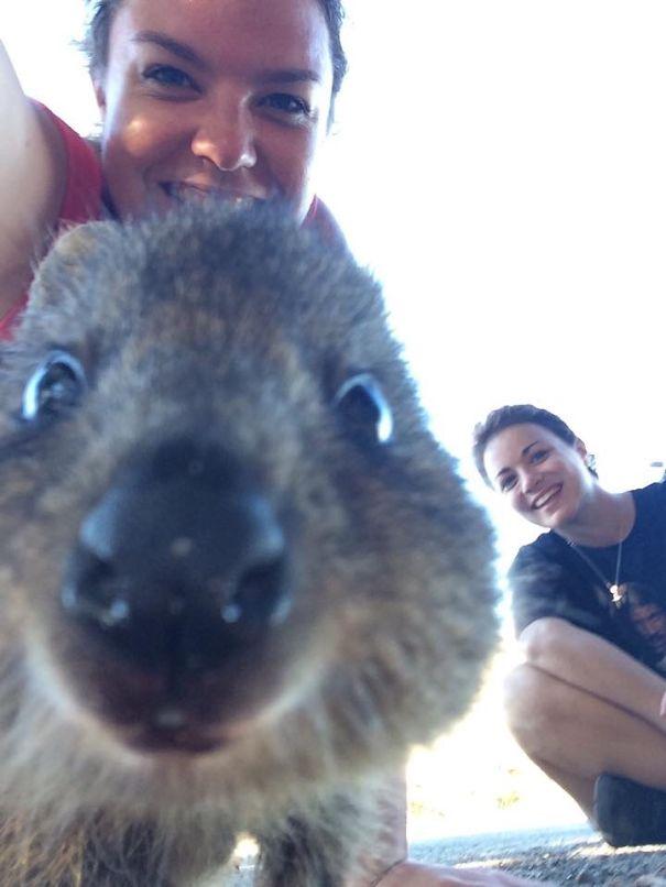 Quokka-Selfie (24)