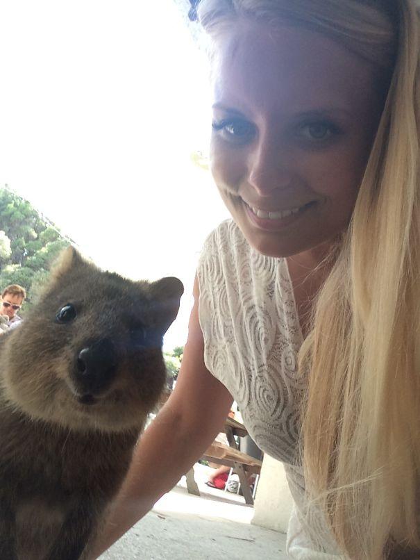 Quokka-Selfie (25)