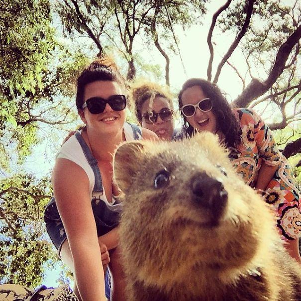 Quokka-Selfie (9)
