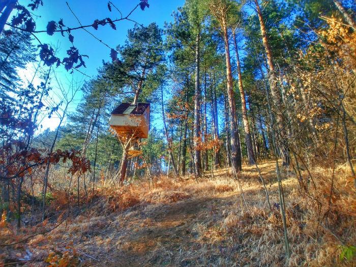 kucica na drvetu sarajevo (1)